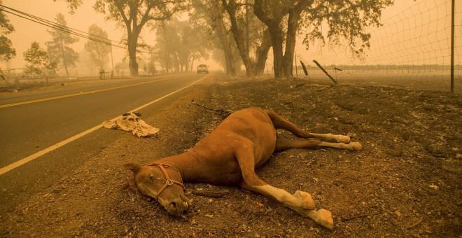 Un caballo muerto a consecuencia del incendio en Middletown, en California. REUTERS