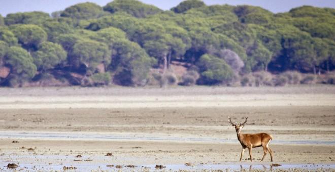 El parque nacional de Doñana, uno de los espacios de la Red Natura 2000 en España. EFE