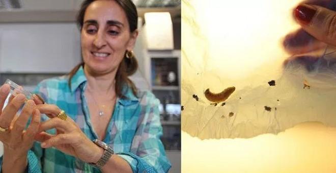 Federicha Bertocchi con un gusano de cera. A la derecha, el plástico consumido por 10 gusanos en 30 minutos.