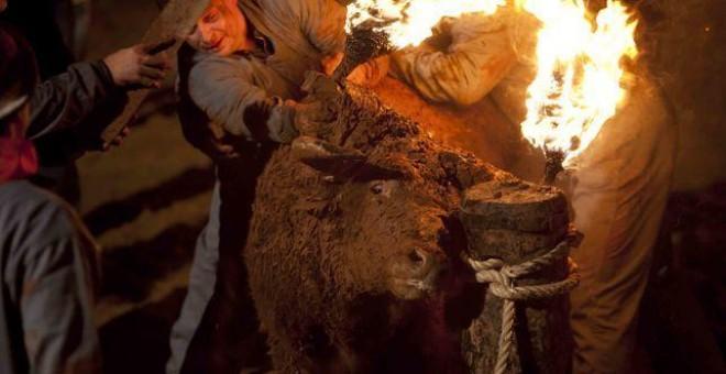 Un toro es embolado en la provincia de Castellón.- EFE