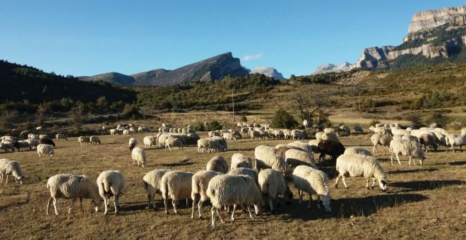 La huella del cambio climático en los Pirineos