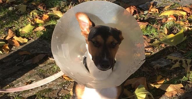 Katalina tuvo que ser operada de sus graves lesiones en el hospital Rof Codina de Lugo.