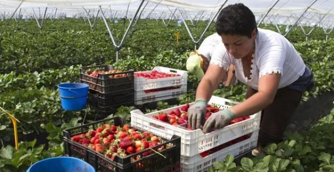 rabajadores en un campo de fresas de Palos de la Frontera - EFE/ JULIÁN PÉREZ