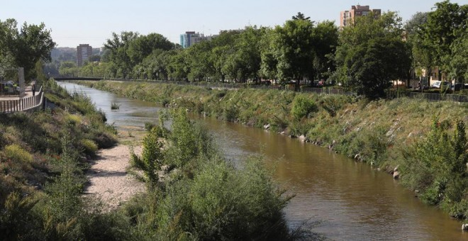 Cientos de aves y peces vuelven al centro de Madrid para vivir en el nuevo Manzanares