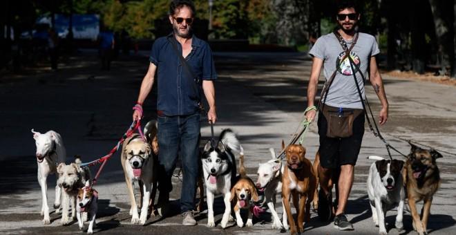 Dos hombres pasean perros en el parque de El Retiro de Madrid. AFP