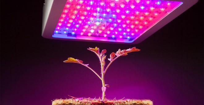 Planta cultivada con iluminación led./PRBX