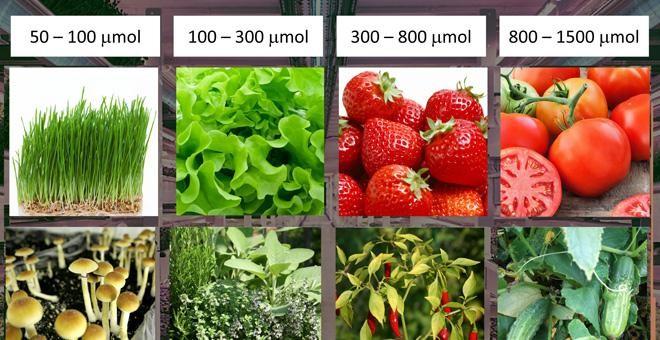 Necesidades lumínicas de diversas frutas y hortalizas clasificadas por el flujo de fotones./ PRBX
