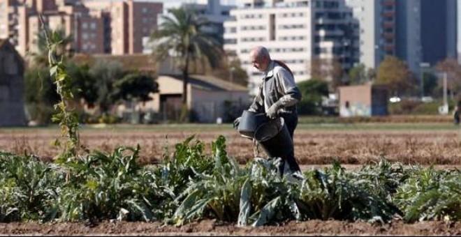 Agricultor en la huerta de la periferia de Valencia. / EFE