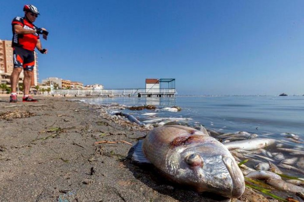 Peces muertos en la playa del Mar Menor tras la gota fría de octubre (Murcia)./ Marcial Guillén (EFE)