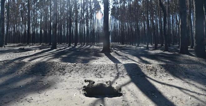 El cadáver de un koala calcinado por el fuego en Kangaroo Island, Australia | EFE