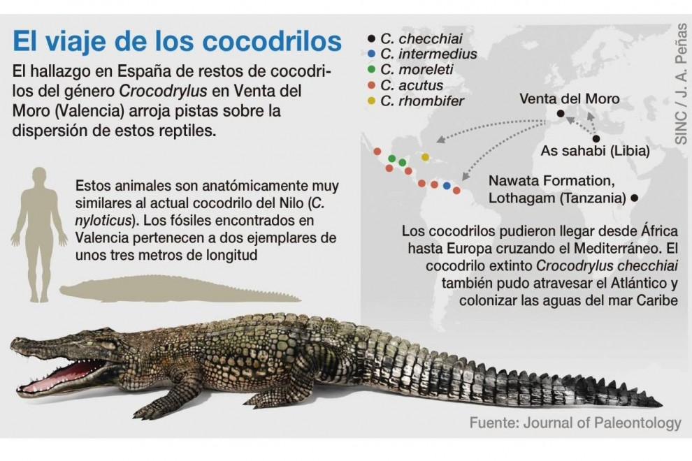 Mapa del viaje de los cocodrilos. / Journal of Paleontology