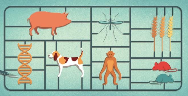 Ilustración de las posibilidades de edición genética de la técnica CRISPR./Davide Bonazzi/Science