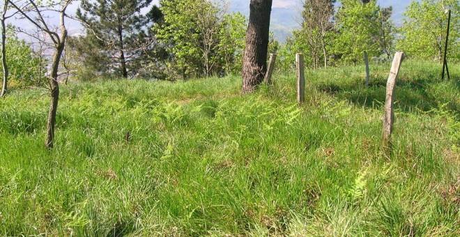Lugar donde se encontrarían las fosas en el monte Avril.