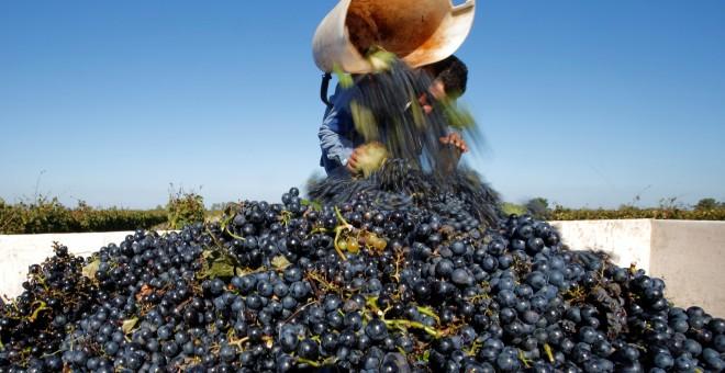 Un homme recueille la récolte de raisins dans un vignoble à Soltvadkert / REUTERS