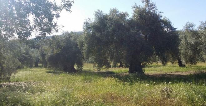 La propiedad de las tierras de cultivo sigue concentrándose en España a pesar de que se abandonan 80.000 hectáreas cada año.