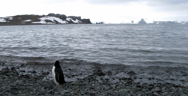 Un pingüino se ve cerca de la base argentina de Carlini en la Antártida/REUTERS