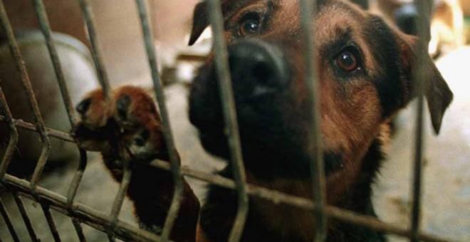 Más de 137.000 perros y gatos fueron abandonados en España en 2016. / EFE