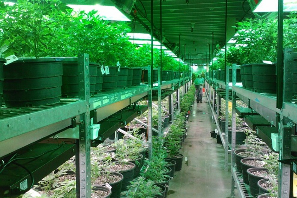 cuáles-son-las-grandes-empresas-que-operan-en-el-mercado-del-cannabis-medicinal-en-españa