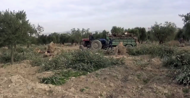 Olivares de Afrin, situados en las proximidades de la zona turca de Hatay.
