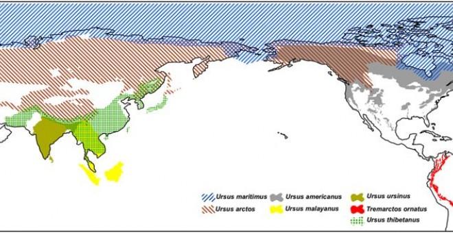 Distribución geográfica de los osos en el mundo, según datos de UICN./SCIENTIFIC REPORTS