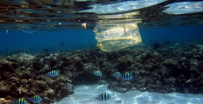 Peces y bolsas de plástico comparten espacio | EFE/ Mike Nelson