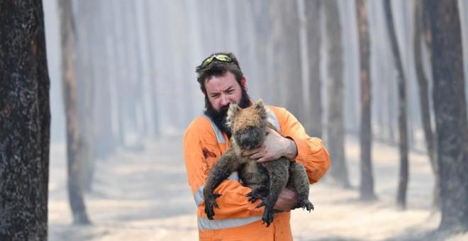 El rescatista de flora y fauna de la región australiana de Adelaida Simon Adamczyk sostiene en brazos a un koala después de haberle salvado del fuego | EFE