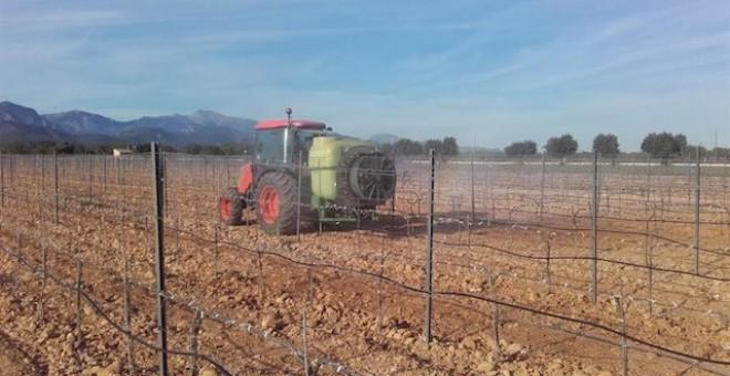 Los 'agricultores de sofá' ya duplican a los que sí trabajan la tierra. / Europa Press