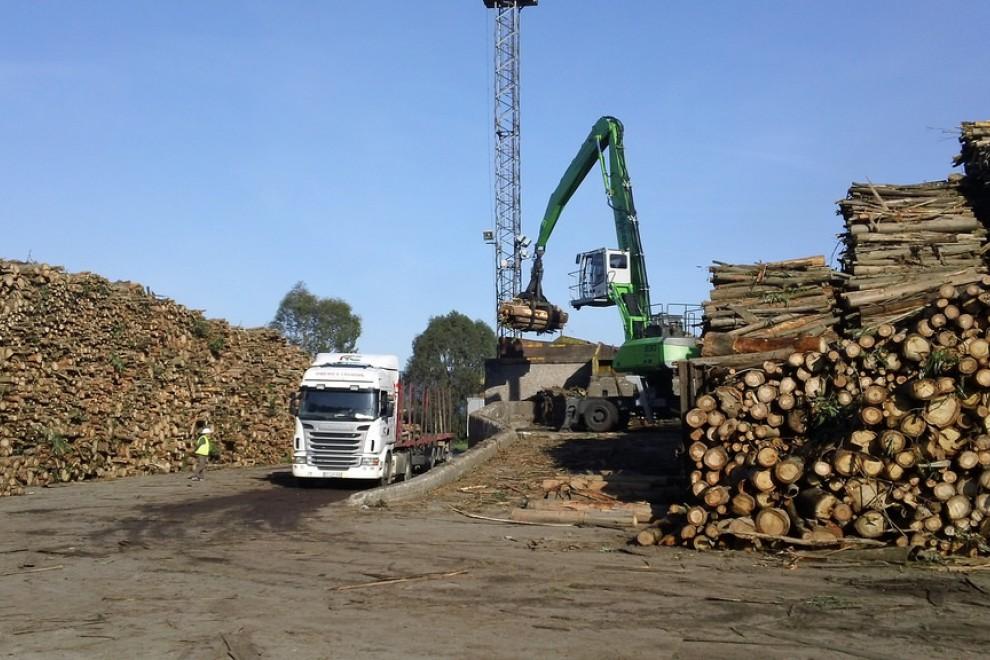Un camión recogiendo eucaliptos talados.