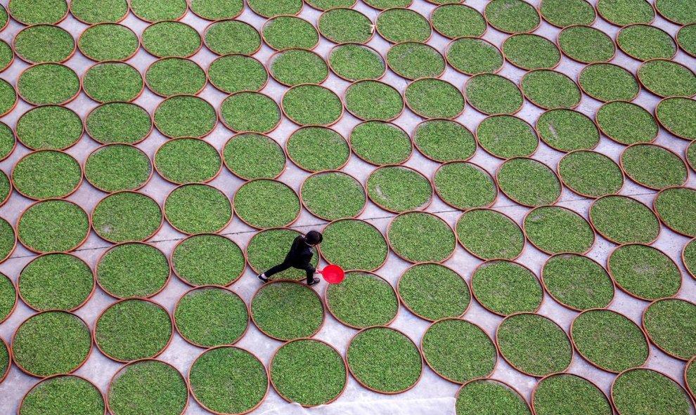 Una mujer camina en un terreno donde se secan las hojas de té en Dening, China. REUTERS/Stringer