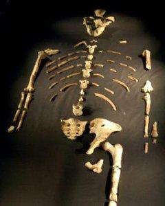 Esqueleto del australopitecus afarensis bautizado por los científicos como Lucy.