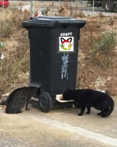 llobregats-contenedor-gatos