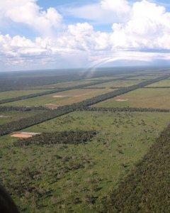 Vista aérea de la deforestación del Amazonas