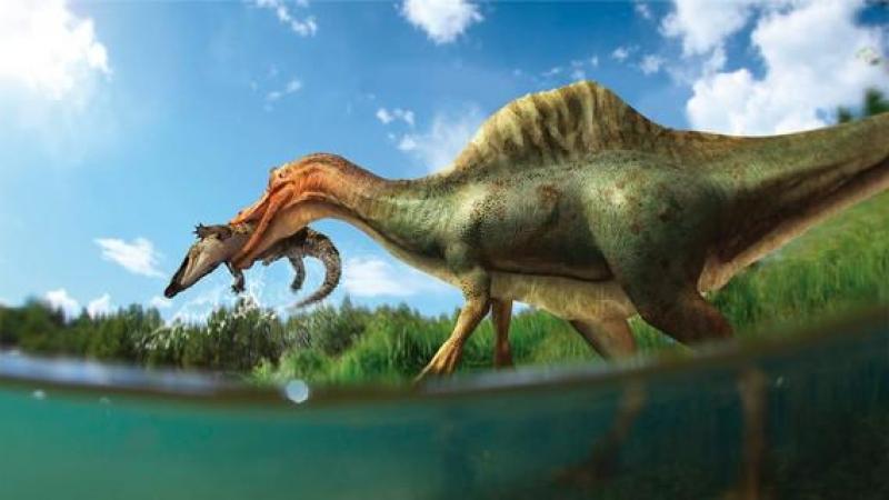 Dinosaurios El Dinosaurio Que Cojeaba Hace 150 Millones De Anos Diario Publico Información sobre dinosaurio en el diccionario y enciclopedia en línea gratuito. dinosaurios el dinosaurio que cojeaba