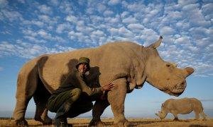 Sudán, el último rinoceronte macho del mundo, en una imagen de archivo. EFE