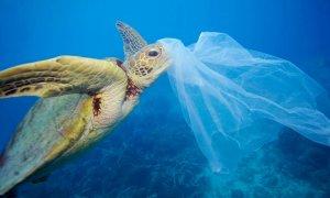 Una tortuga junto a una bolsa de plástico. WWF