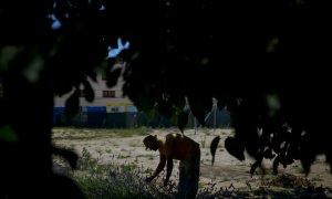 Un hombre trabaja en uno bancal colectivo de un huerto urbano de Madrid. (Dani Pozo/AFP)