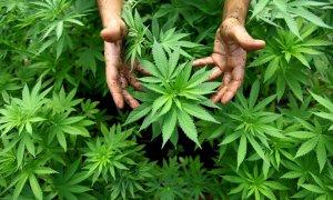 El mundo decide esta semana en Viena si avanza en la regulación del cannabis