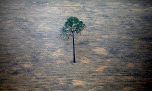 La destrucción de los ecosistemas, el primer paso hacia las pandemias