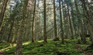 Los bosques representan aproximadamente el 38 % de la superficie de la Unión Europea. / Pixabay