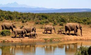 """Los resultados iniciales han descartado todas las enfermedades habituales que causan la muerte en masa de los elefantes, por lo que el país podría estar enfrentándose a una """"enfermedad nueva"""". / PIXABAY"""