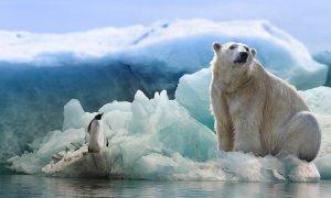 Oso polar. / Pixabay