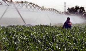 Un operario controla un sistema de riego en una finca sembrada de maíz. EFE/Emilio Morenatti