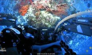 Científicos australianos descubren un arrecife de coral de la altura del Empire State