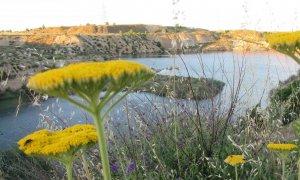 Vista general de una de las balsas de agua de la laguna de Ambroz, en el distrito madrileño de San Blas-Canillejas.