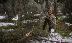 Richi, un jardinero municipal de la Casa de Campo, carga con una de las ramas caídas tras el temporal Filomena.