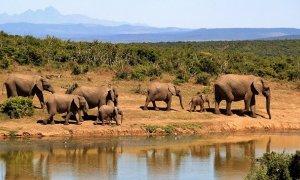 Una manada de elefantes en una foto de archivo.