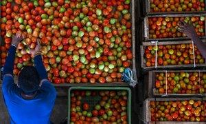 Imagen de archivo de un campesino de Sri Lanka junto a varias cajas de tomates.