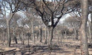 Foto de archivo del incendio registrado en Doñana en 2017.