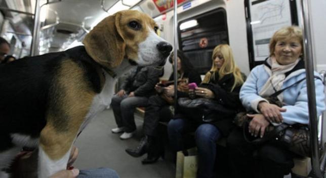 Los perros podrán entrar en el Metro de Madrid en horas valle y los fines  de semana | Público