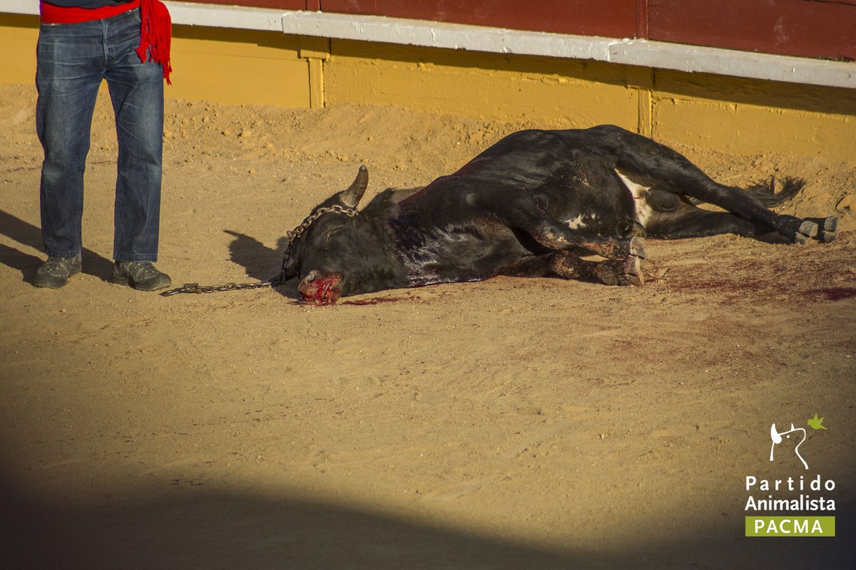 'Hay que acabar con todos los festejos taurinos en España, que son terribles'
